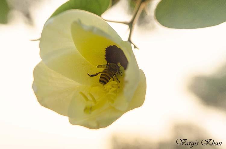 flowers macro photography