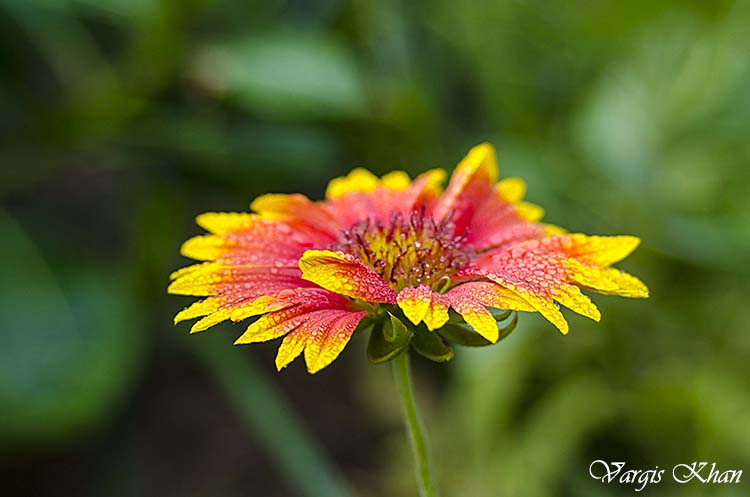 flowers-macro-photography-vargis-khan-8