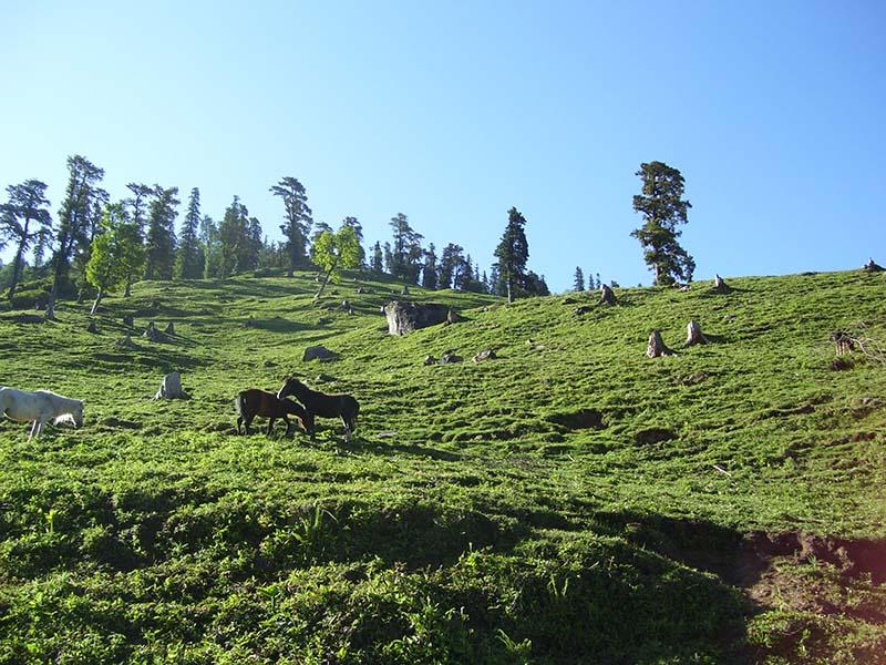 views from kothi