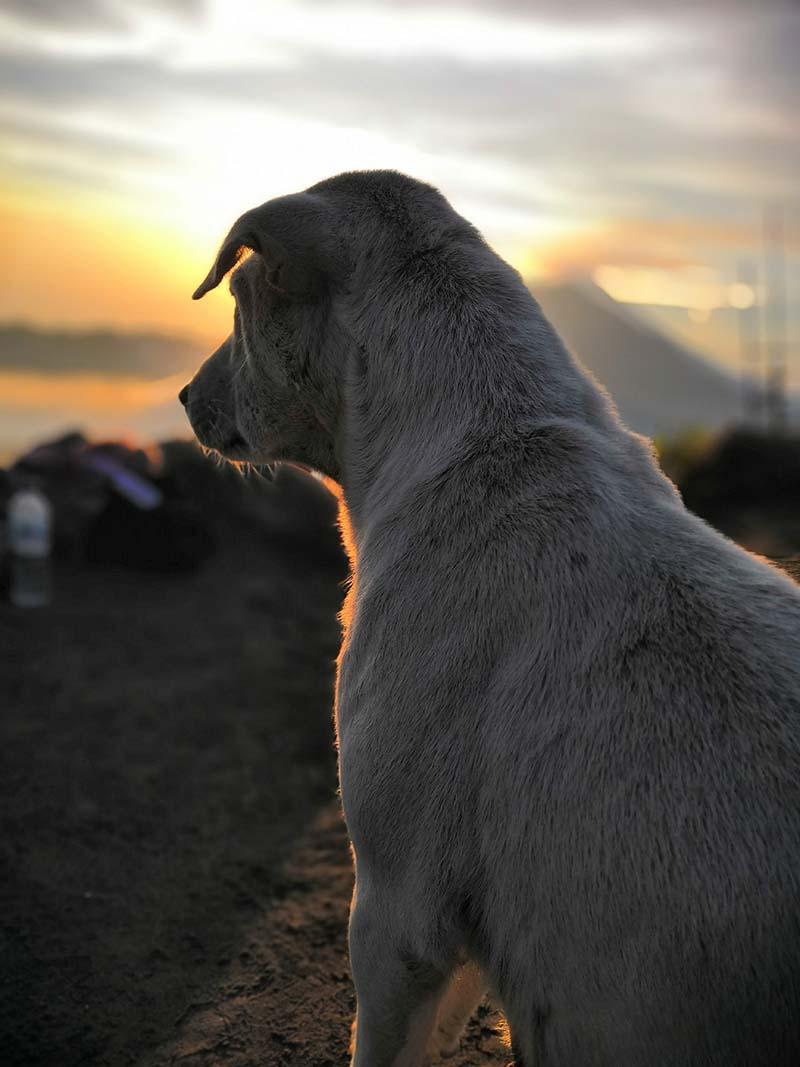 a dog at mount batur