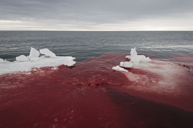 A grey, hazy sky looms over a silvery ocean. In the foreground, large chunks of ice are surrounded by waters stained red with blood.