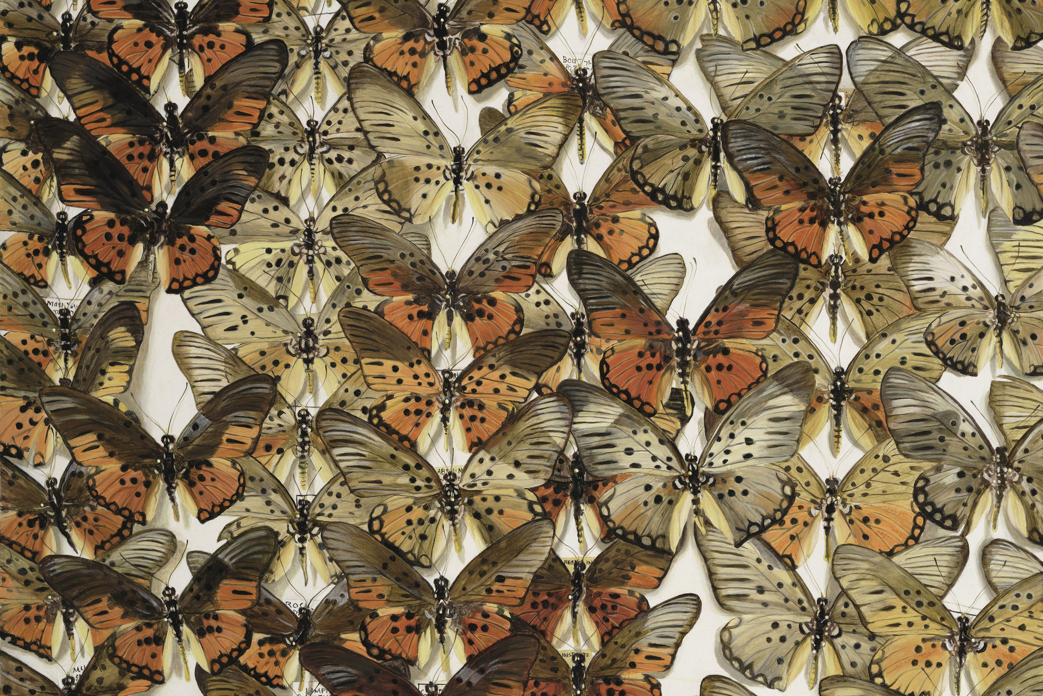 Crowded painting of butterflies, side by side, overlapping, still. One feels as if they are standing in a bug museum, standing very near a wall of fossilized butterflies.