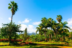 Tropical Hawaiian garden with palm trees and exotic flowers.