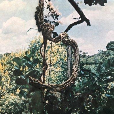 celer and forest management art