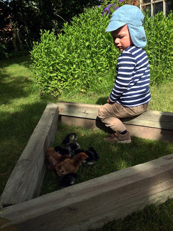 Asger lufter de små kyllinger.