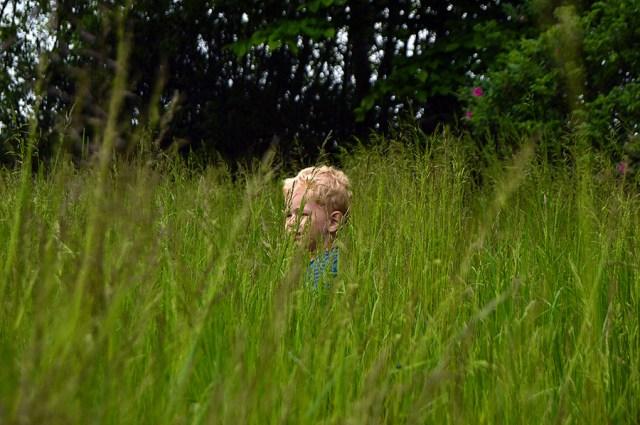 Gemmeleg i det høje græs.