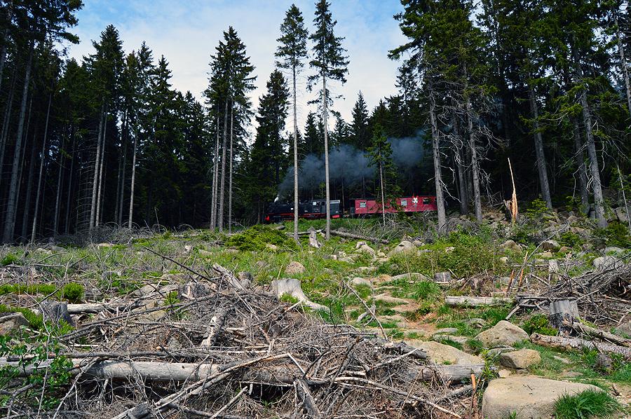 Toget som kører igennem Nationalpark Herz til Blocken (Bloksbjerg)