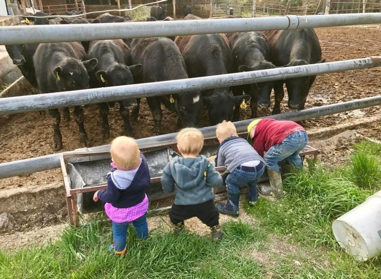 4 little farmers at the trough