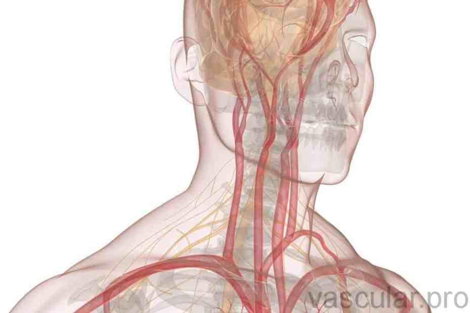 Vascular definição periférica médica