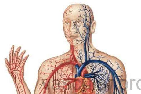 Cirurgia Arterial