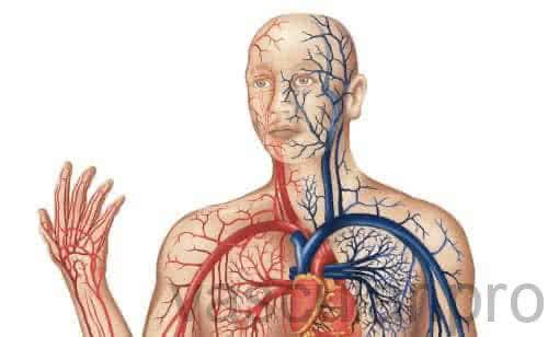 O que é vasculite por hipersensibilidade leucocitoclástica