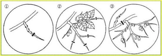Cywy trim diagram