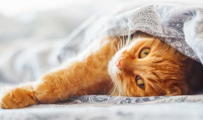 Как поднять температуру коту в домашних условиях. Низкая температура у кошки