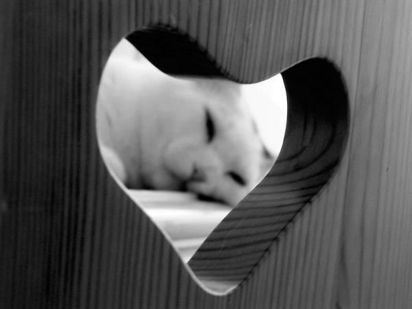 У кота больное сердце. Сердечный приступ у кошки: причины и симптомы