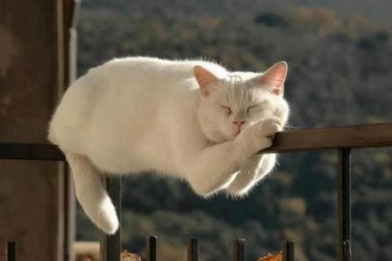 Кот плохо ест и постоянно спит вялый что делать