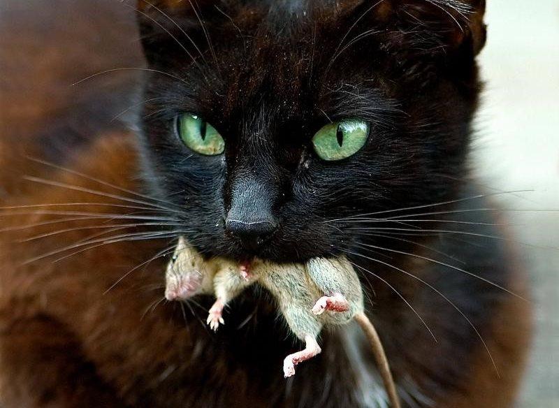 Запор у кошки. Лечение в домашних условиях. Чем кормить кошку при запоре: список полезных продуктов