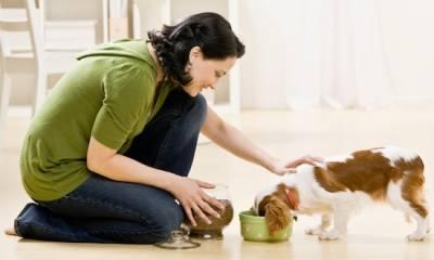 Восстановление собаки после пироплазмоза продолжительность реабилитации витамины правила кормления двигательная активность