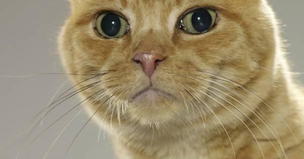 Основные правила и рекомендации как проглистогонить кошку самостоятельно