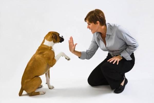 Остеохондроз у собак симптомы