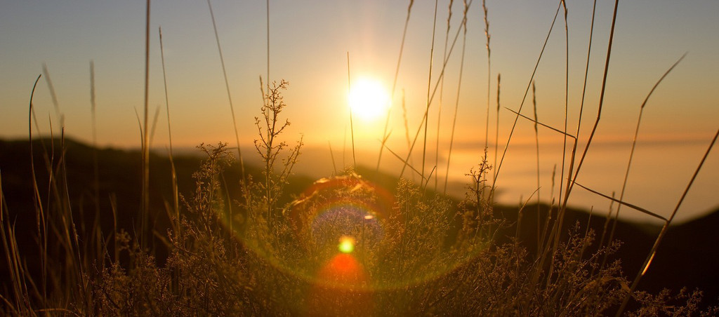 Did You Know That Sunlight Might Be Used To Produce Drugs, Sustainably And Cheaply