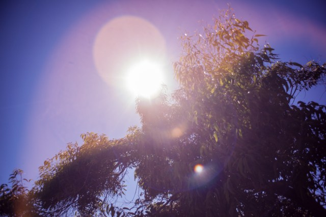 4 Lenses For Amazing Camera Lens Flares Vashivisuals Blog