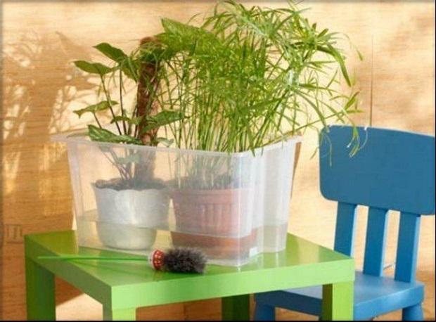 Verser abondamment la végétation avec de l'eau
