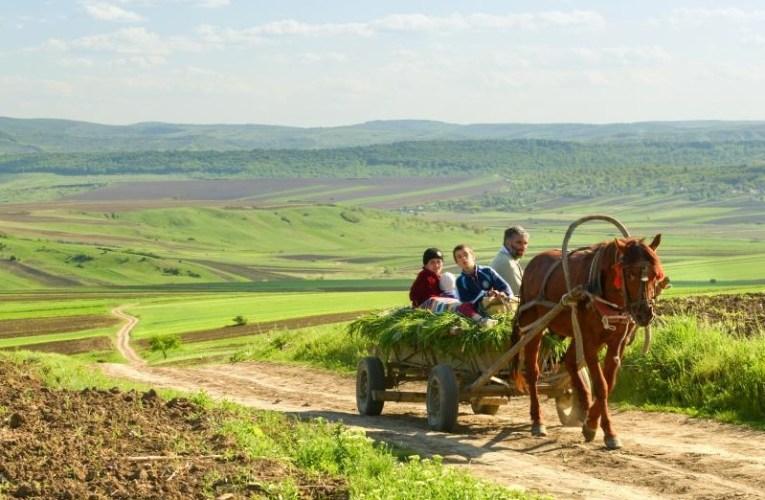 Sunt milioane de euro pentru tinerii vasluieni care se întorc în țară, să se facă fermieri! Vor primi câte 40.000 de euro!