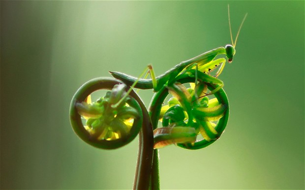 mantis-bike_2191258b