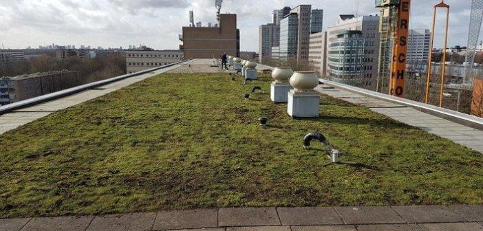 Onderzoek van start naar impact groene daken op energievraag gebouwen