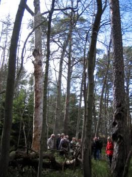 Naturskyddsföreningen på vandring i Ryssbergen
