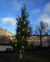 Julgran 2011 på Finnberget i Nacka
