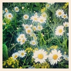 blommor fotade med instragram på kanalvägen i henriksdalshamnen
