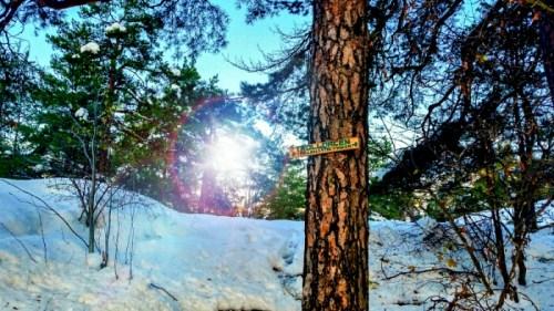 Skylten för Trolldalen i snötäckta skogen