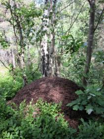 Skogsmyror i Trolldalen på Henriksdalsberget i Nacka