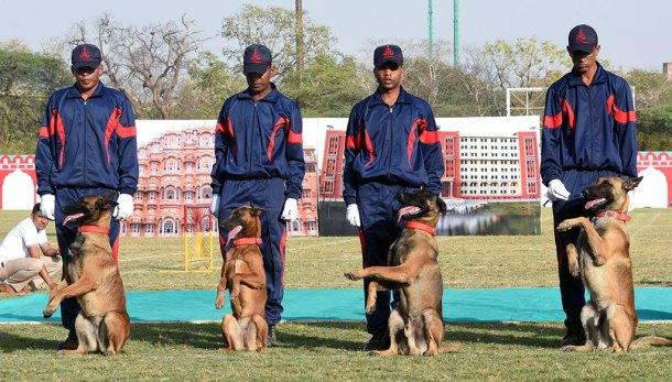 Rajasthan Diwas 2017 Dog Show