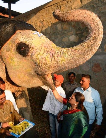 vasundhara-raje-hathi-gaon-wildlife-matters-rajasthan-CMA_2652
