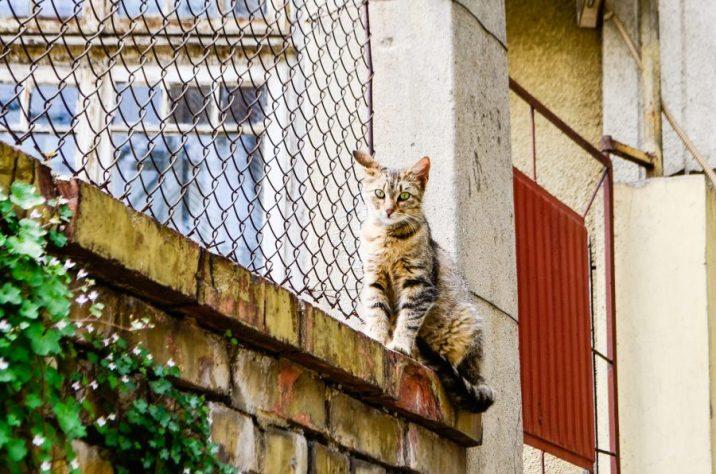 търново котка