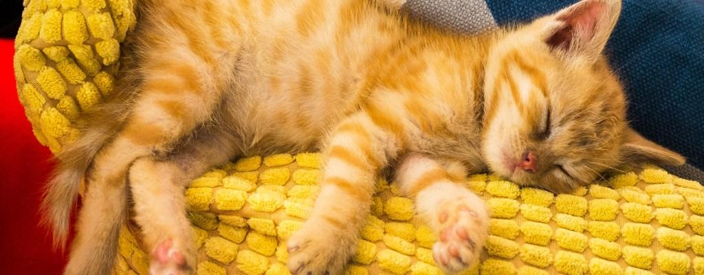 Котешки истории