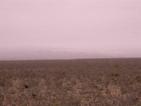 Punta de Choros III
