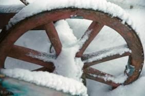 Wheel of my wheelbarrow