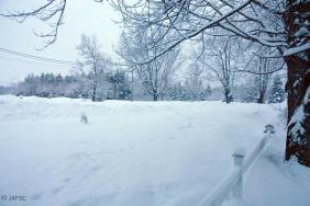 Snowed scape