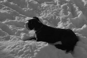 Pandita loves snow