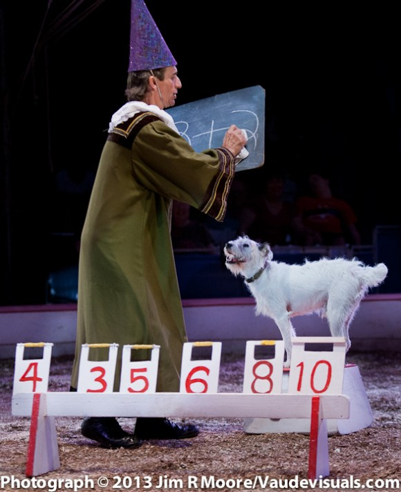 Johnny Peers prepares the mathematical question for his dog to answer by selecting the right number card.