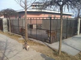 Grace begrüßt ihre neuen Nachbarn