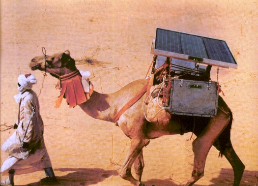 In Djibouti, vaccines were once transported using photovoltaic-powered refrigeration systems mounted on camels.