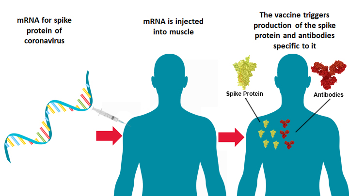 mRNA vaccines do not work and trigger the production of spike proteins and antibodies in your blood.