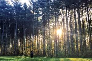 Blackbird State Forest, Smyrna, Delaware