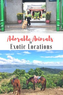 Adorable Animals in Exotic Locations vaycarious.com/2017/01/25/animals