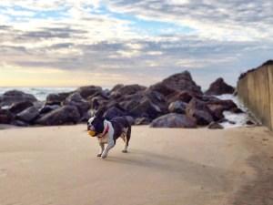 dog on burleigh heads beach at sunrise Vaycarious.com