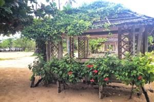 Flowers on Palawan Island https://vaycarious.com/2017/02/01/flowers/